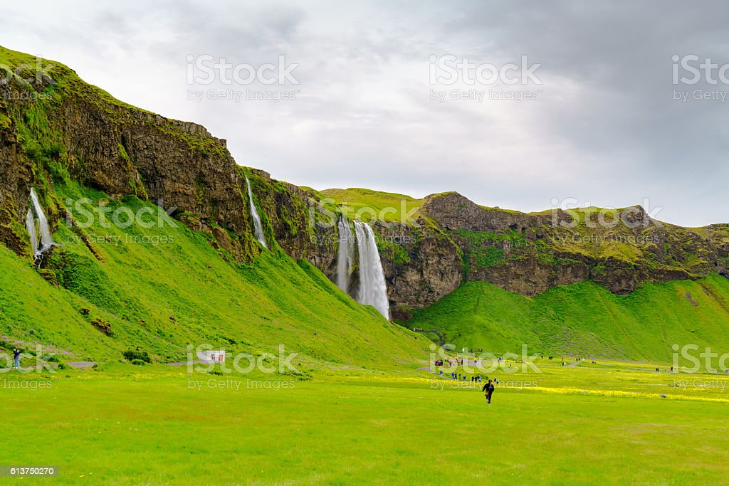 Skogafoss and the field of various flowers stock photo