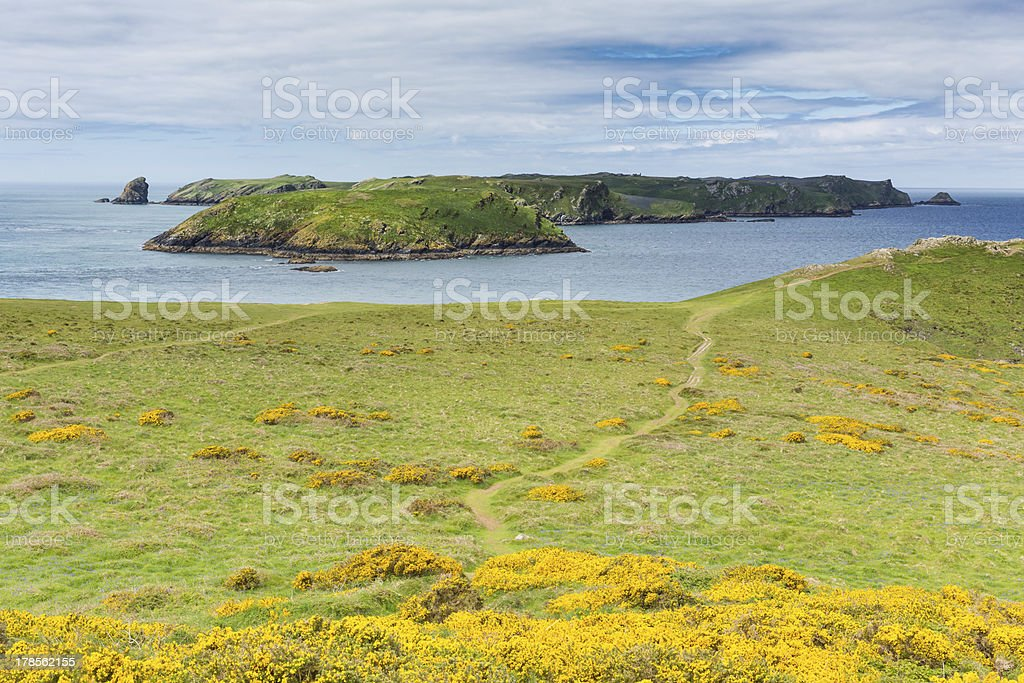 Skomer Island Wales royalty-free stock photo