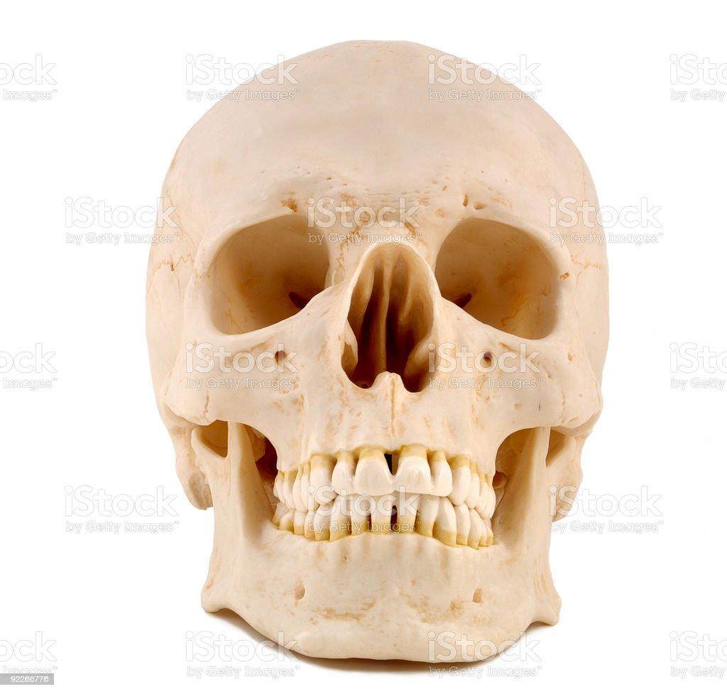 Skull 1-Medical Model royalty-free stock photo