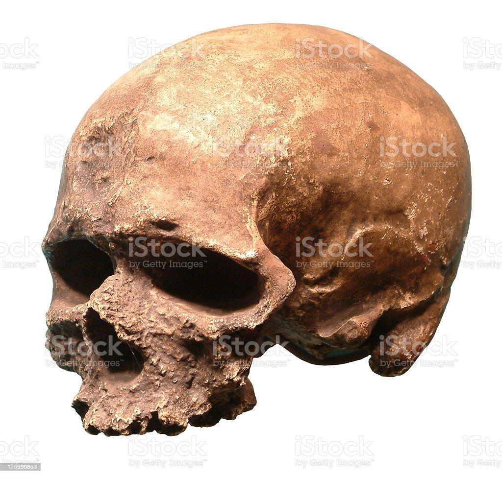 Skull 2 royalty-free stock photo