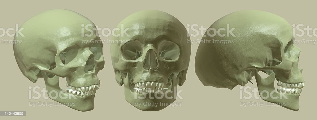 Skull Array. royalty-free stock photo