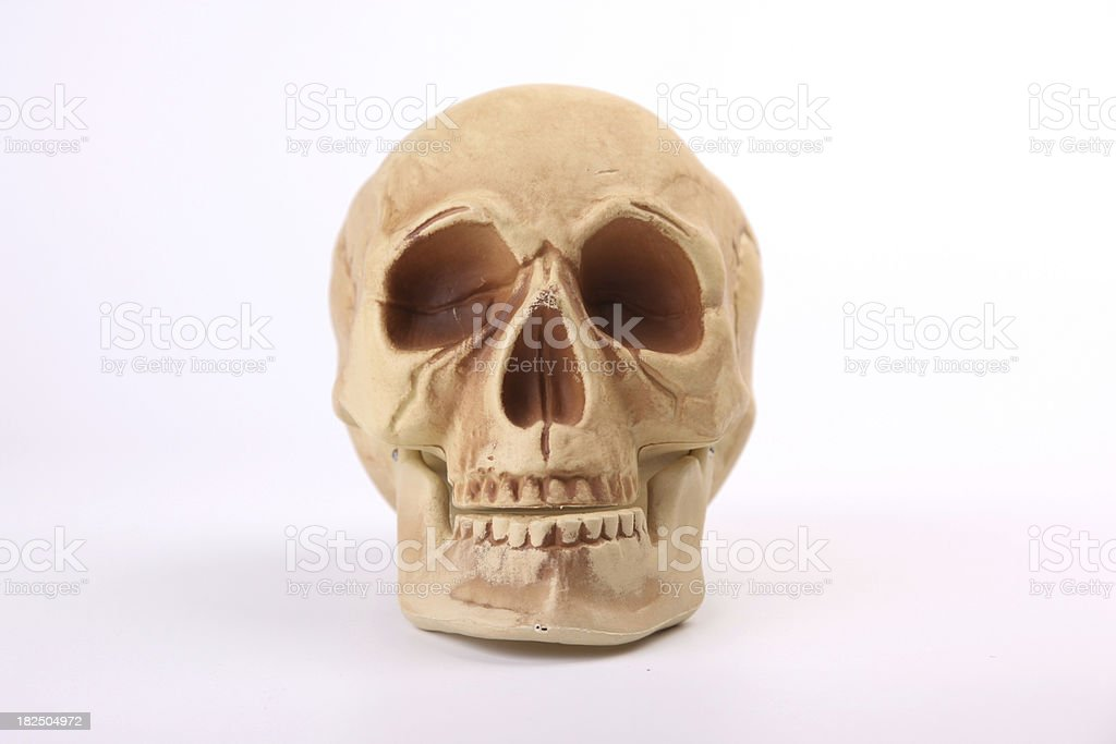 Skull Facing Toward Audience royalty-free stock photo