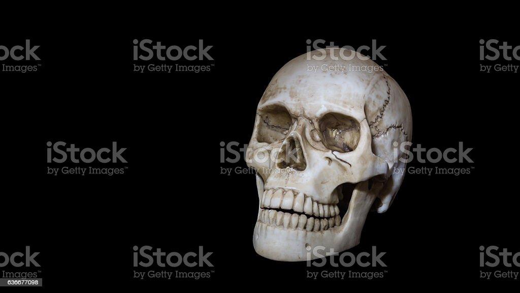 Skull, head bone with teeth, negative symbol, dead stock photo