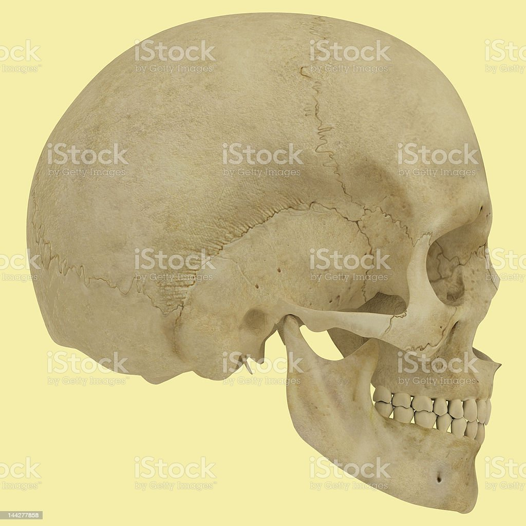 Skull Illustration. royalty-free stock photo