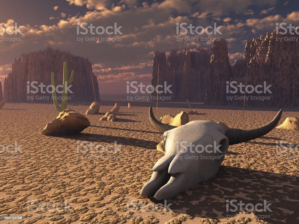Skull in desert stock photo