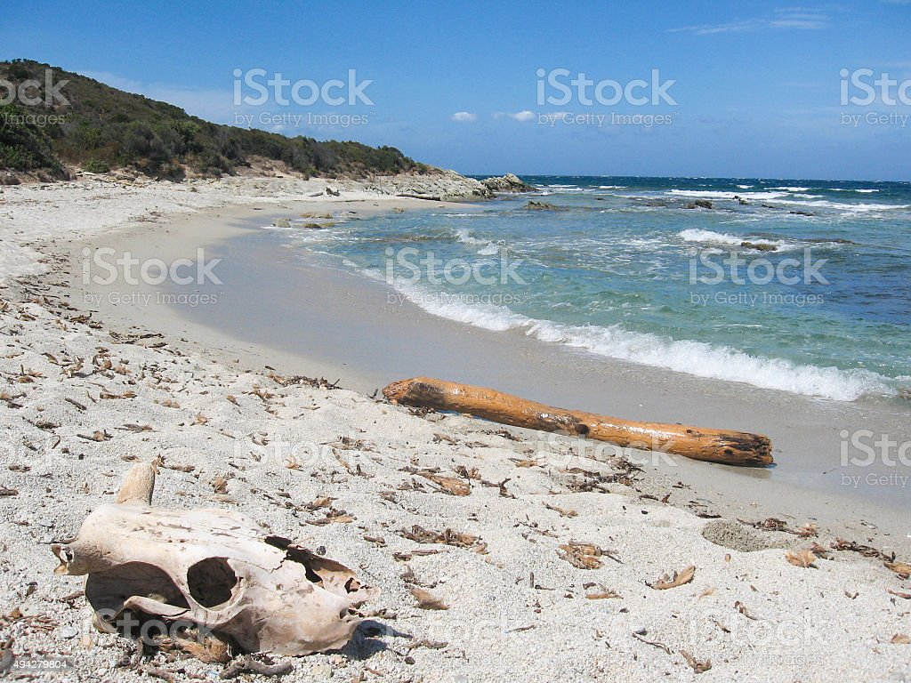 Skull in the sand royalty-free stock photo
