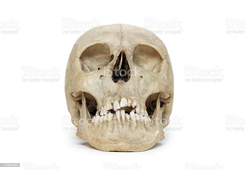 Skull Isolated On White stock photo