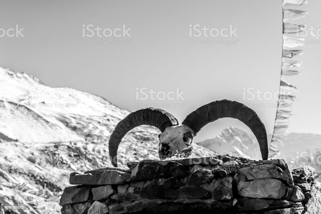 Skull of an animal in the Himalayas stock photo