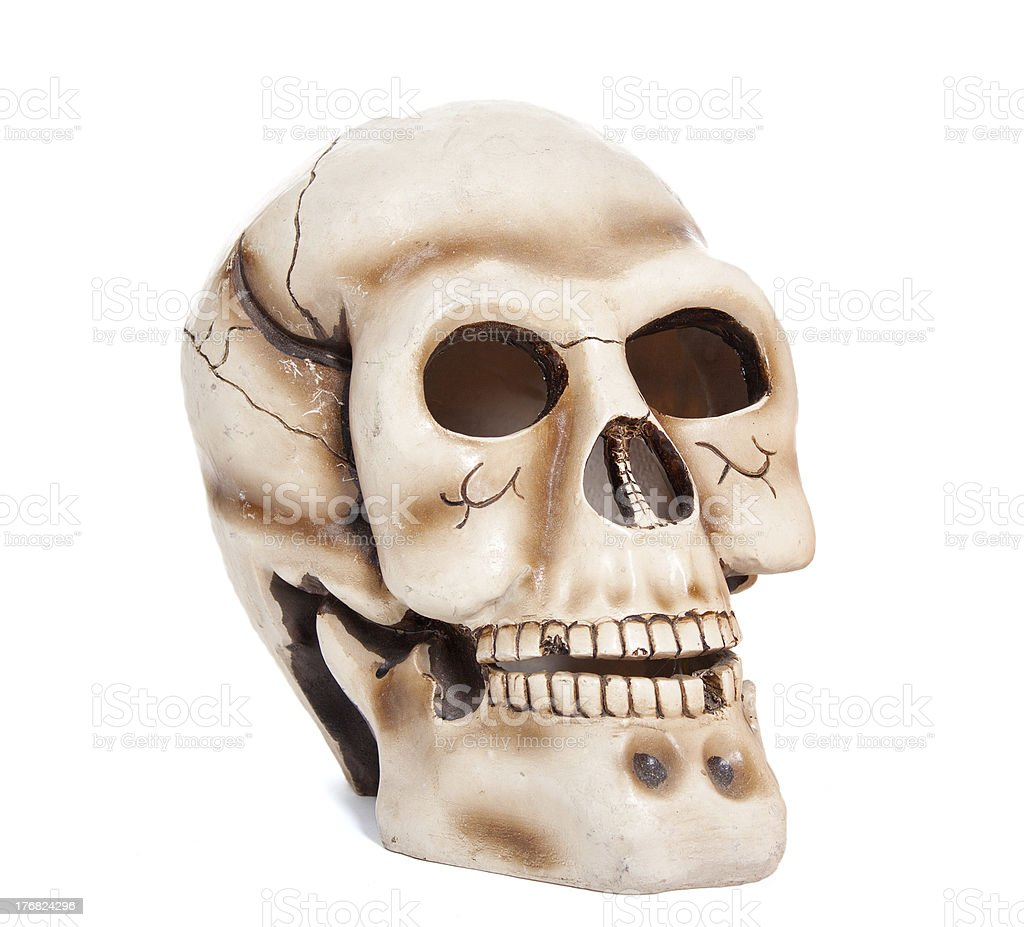 Skull of the person royalty-free stock photo