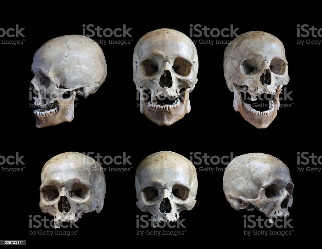 Skull of the person stock photo
