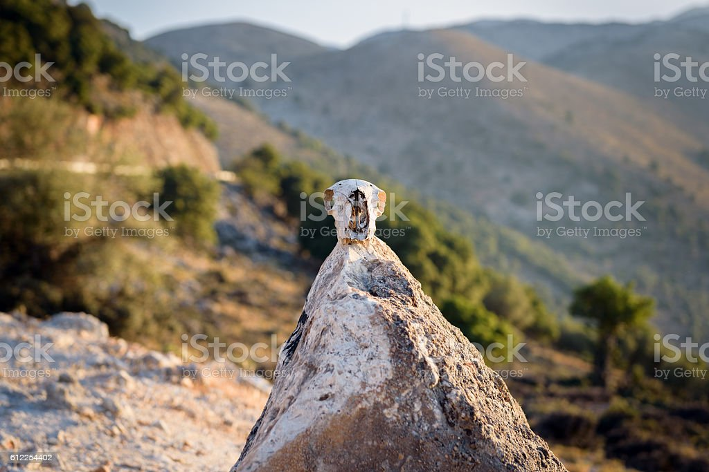 Skull of wild animal on a top of small pyramid stock photo