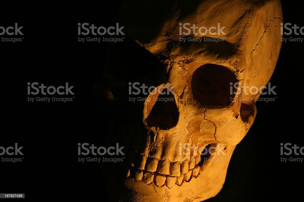 Skull on black stock photo