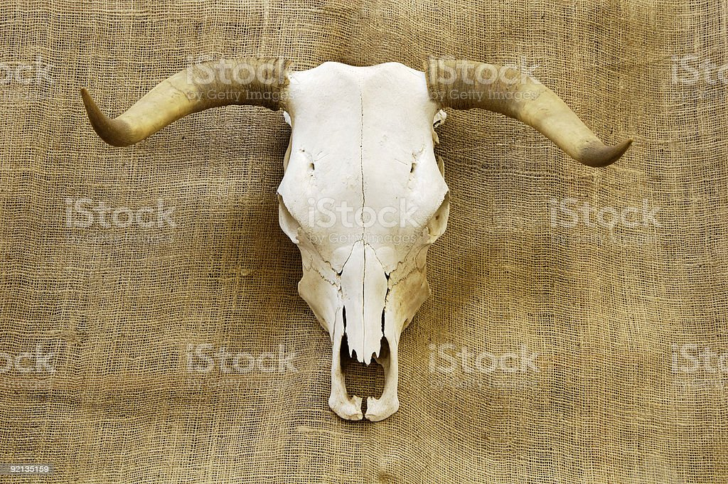 skull on burlap stock photo
