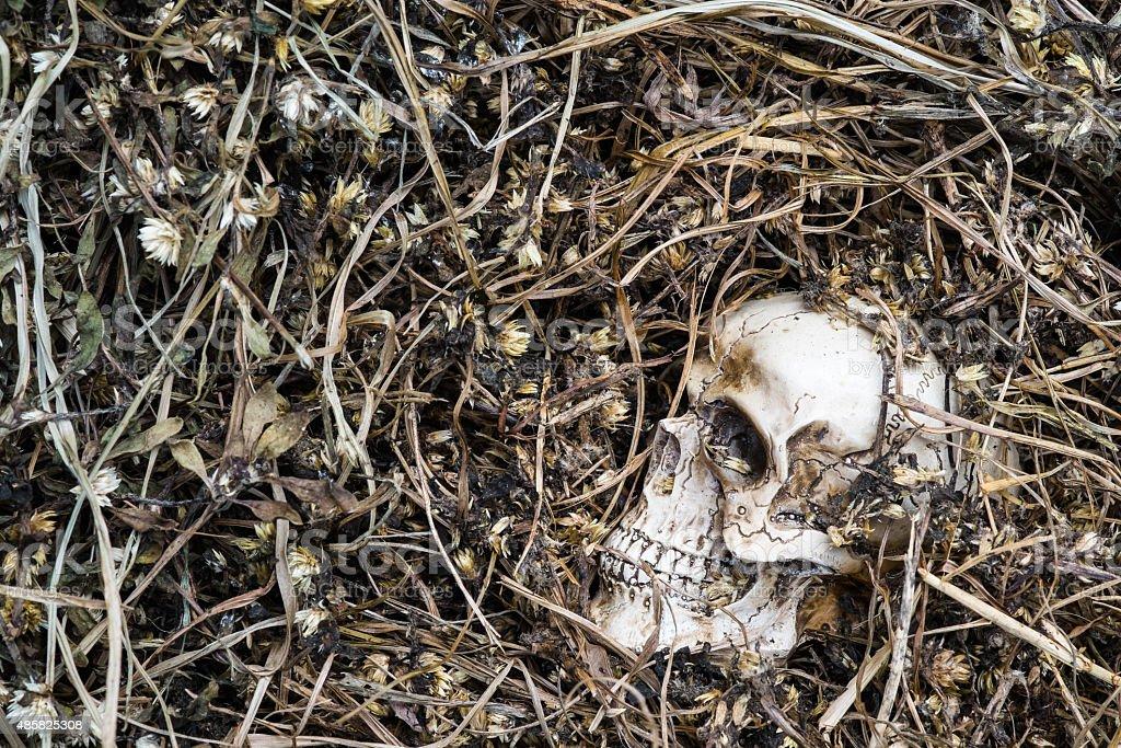 skull on dried grass stock photo