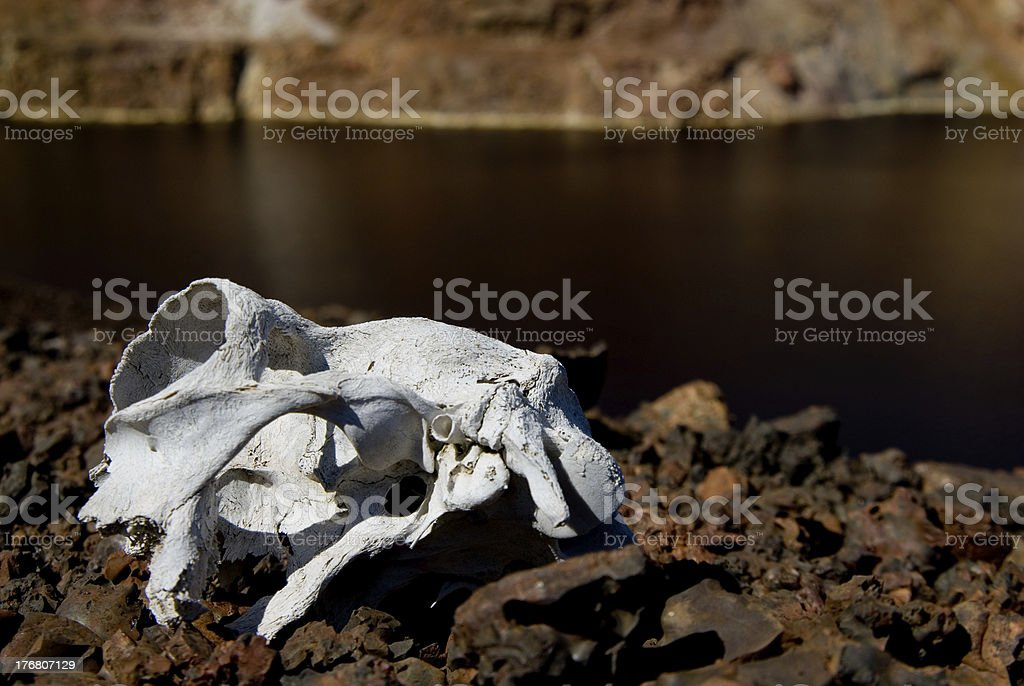 skull on remaining portions of metal in mine acid lake royalty-free stock photo