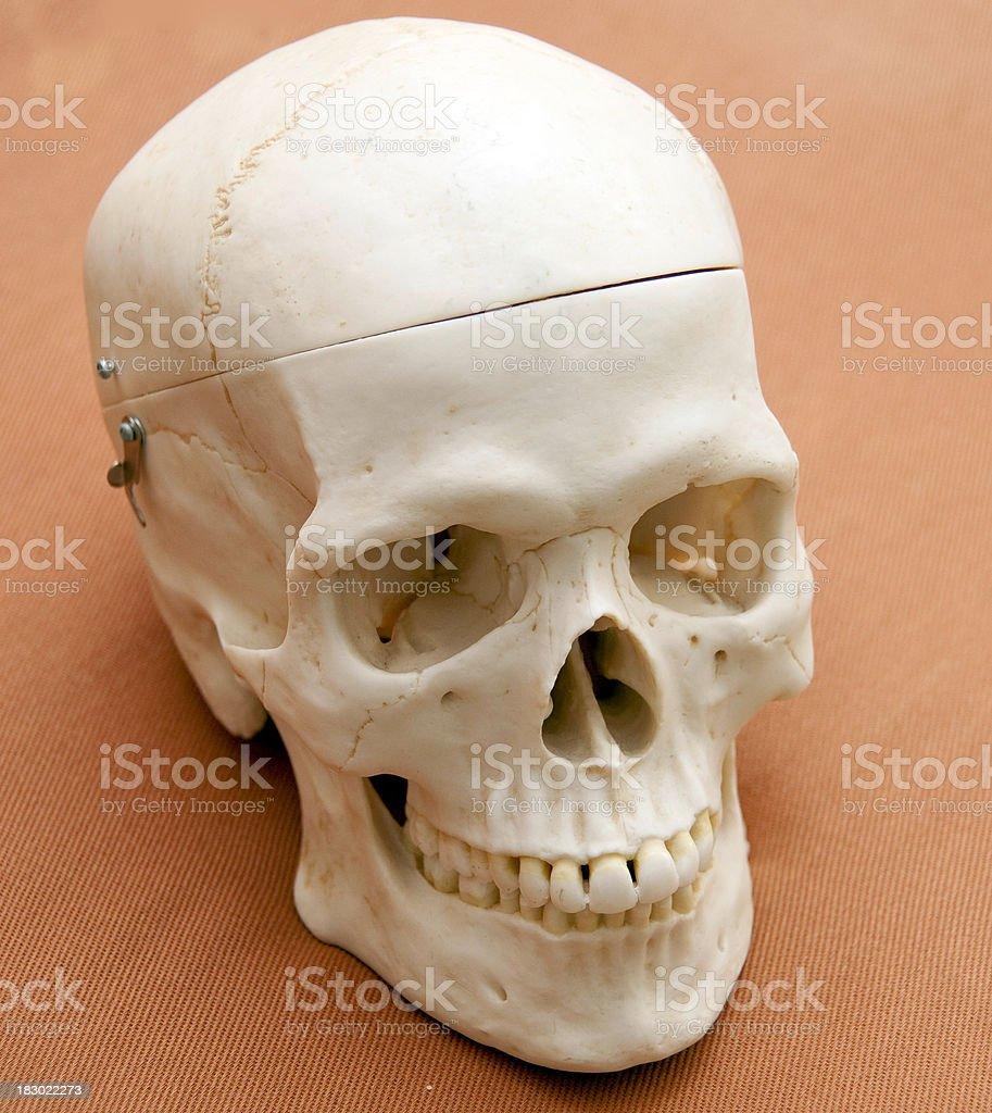 skull on table stock photo