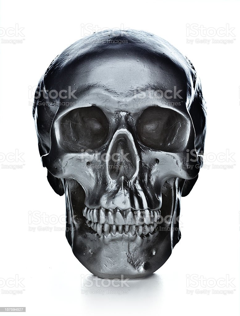 skull on white background stock photo