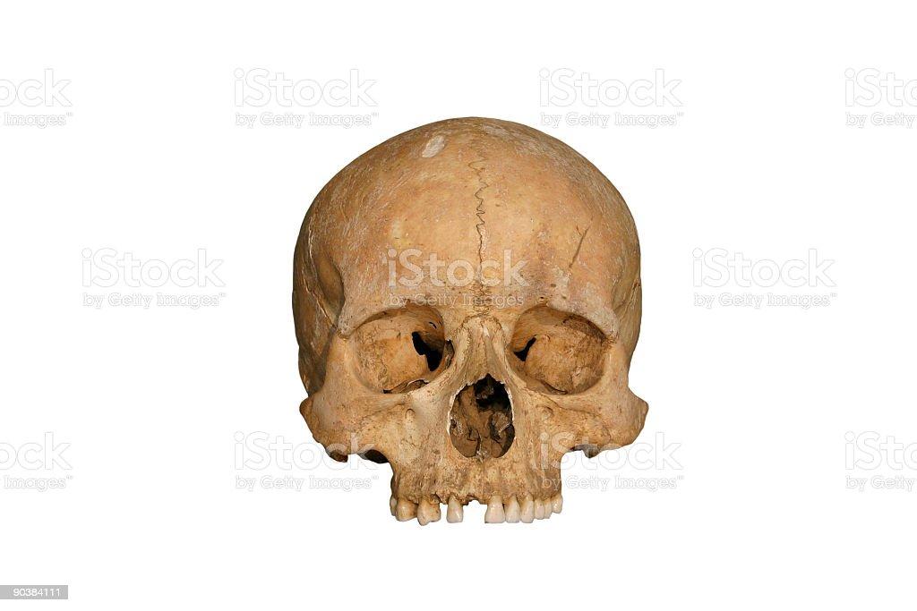 Skull on white stock photo