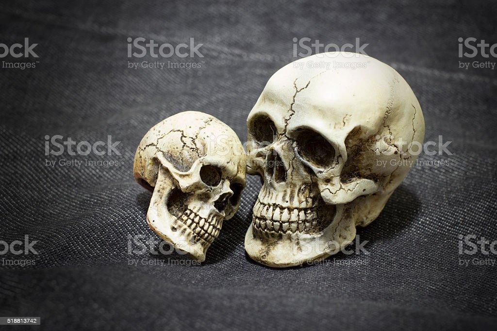 skull on wooden background / Still life style stock photo