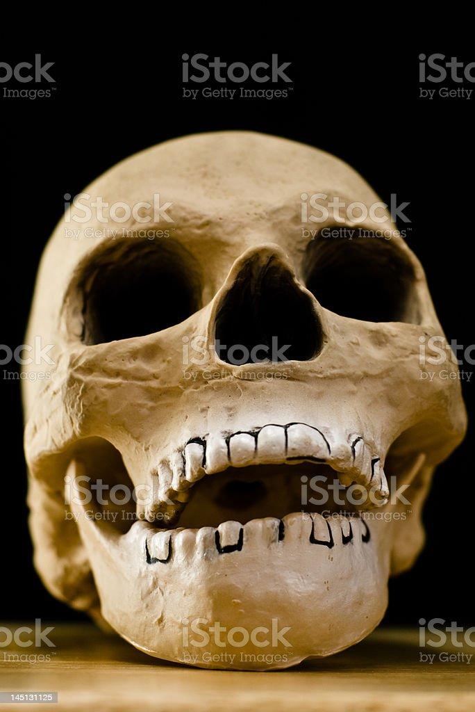 Skull (Murray) stock photo