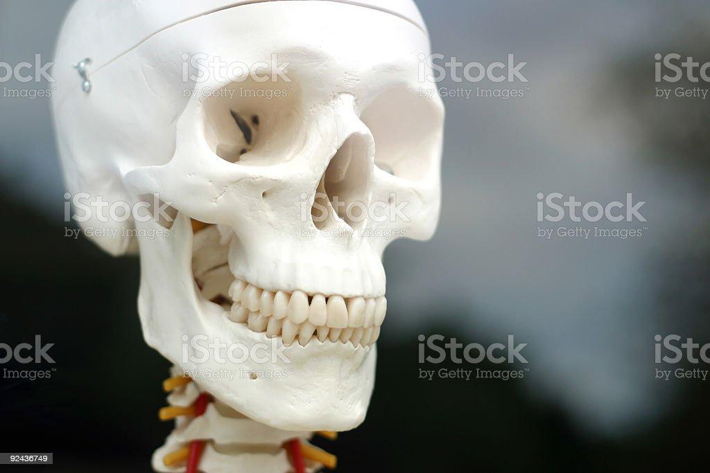 Skull Shot royalty-free stock photo