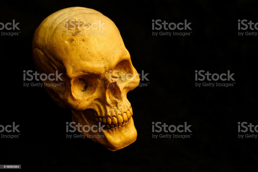 skull still black background stock photo