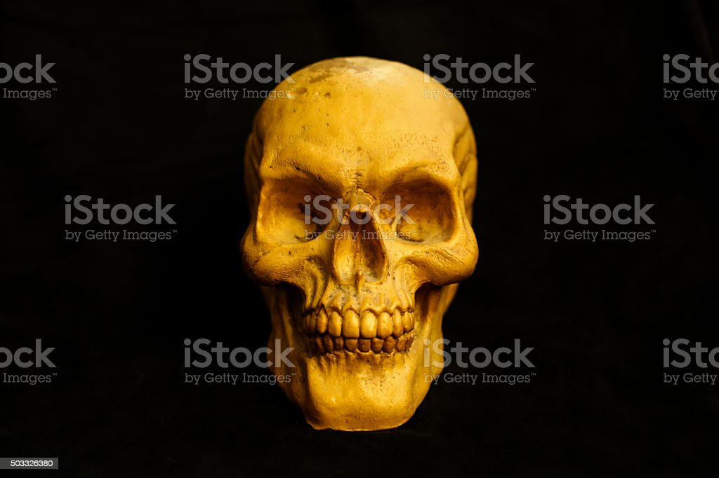 skull still stock photo