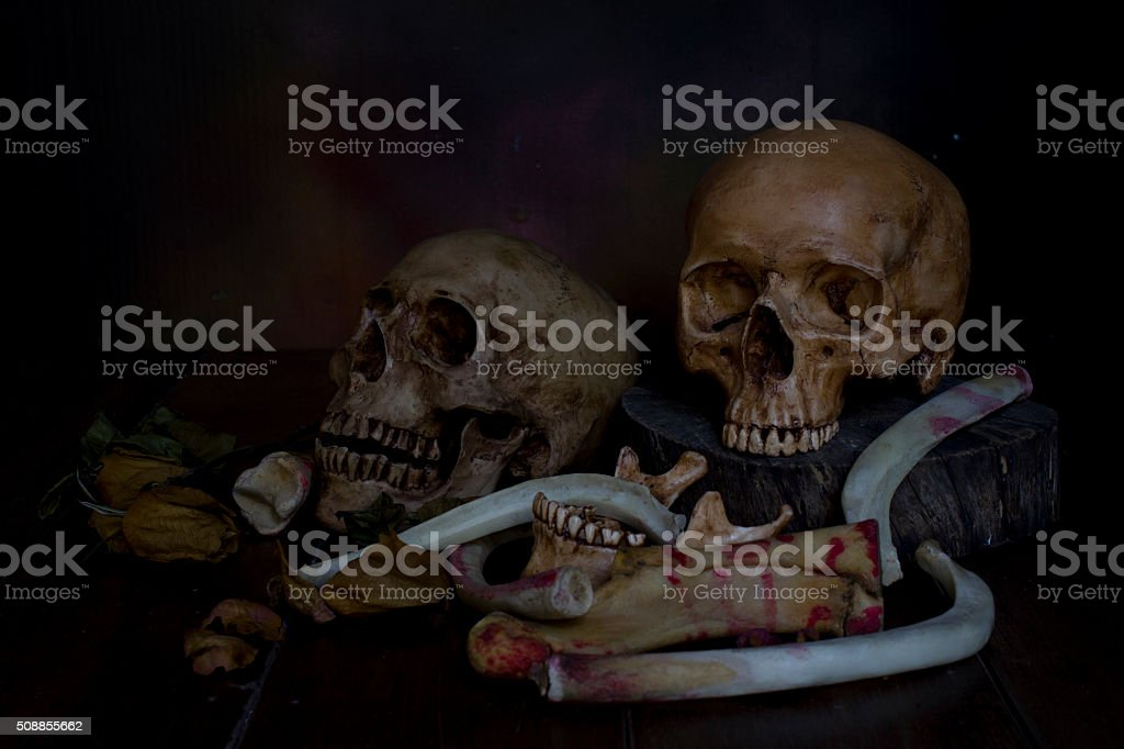 Skull with dry roses - Still life style stock photo