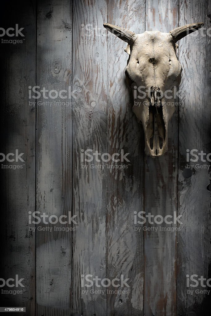 Skull with horns of animal stock photo