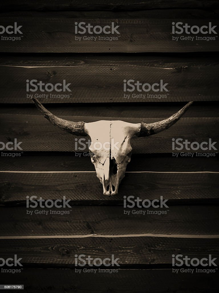 Skull with horns stock photo