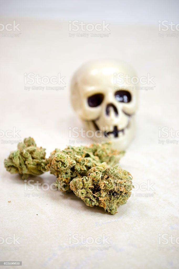 skull with pot stock photo