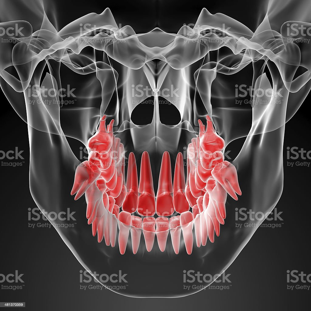 Skull with visible red teeth stock photo