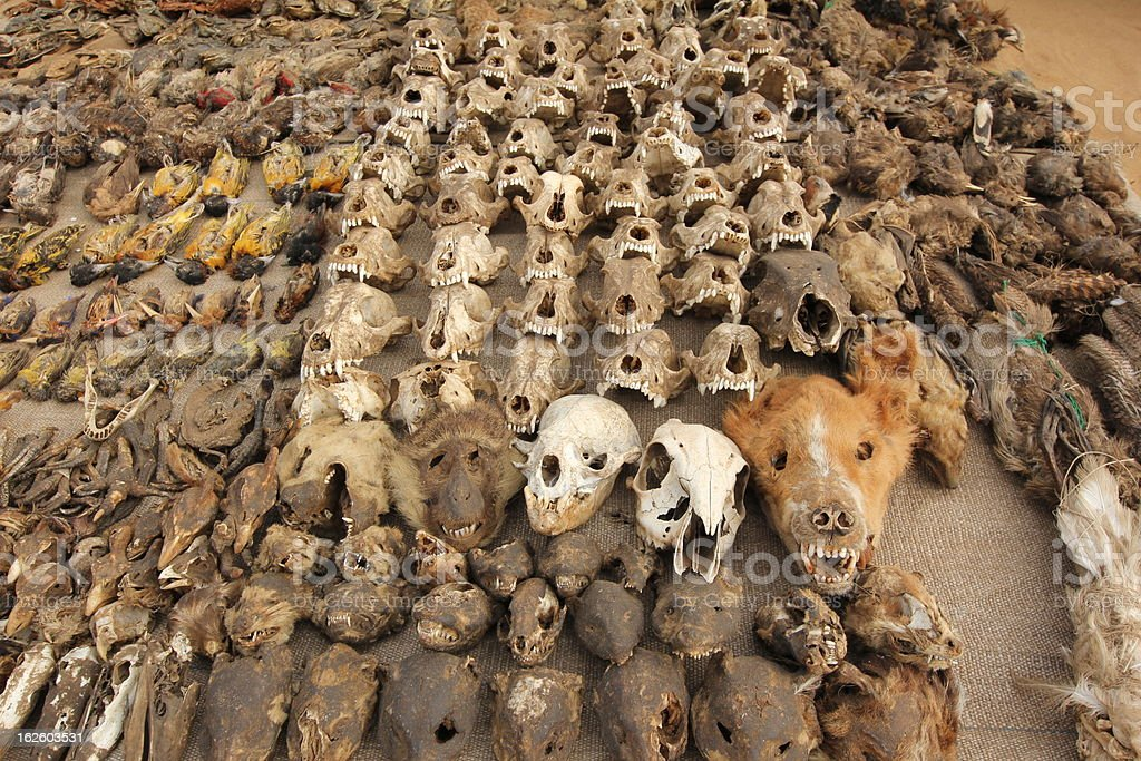 Skulls at the Voodoo market in Lom?, Togo stock photo