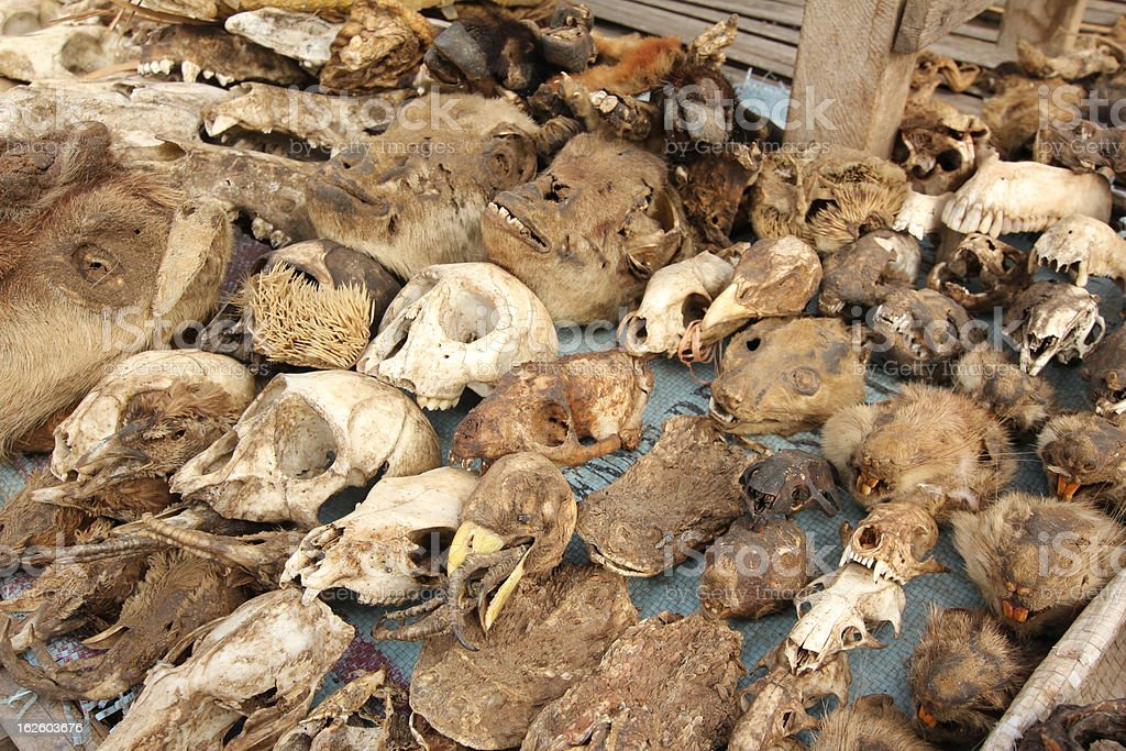 Skulls at the Voodoo market in Lom?, Togo stock photo