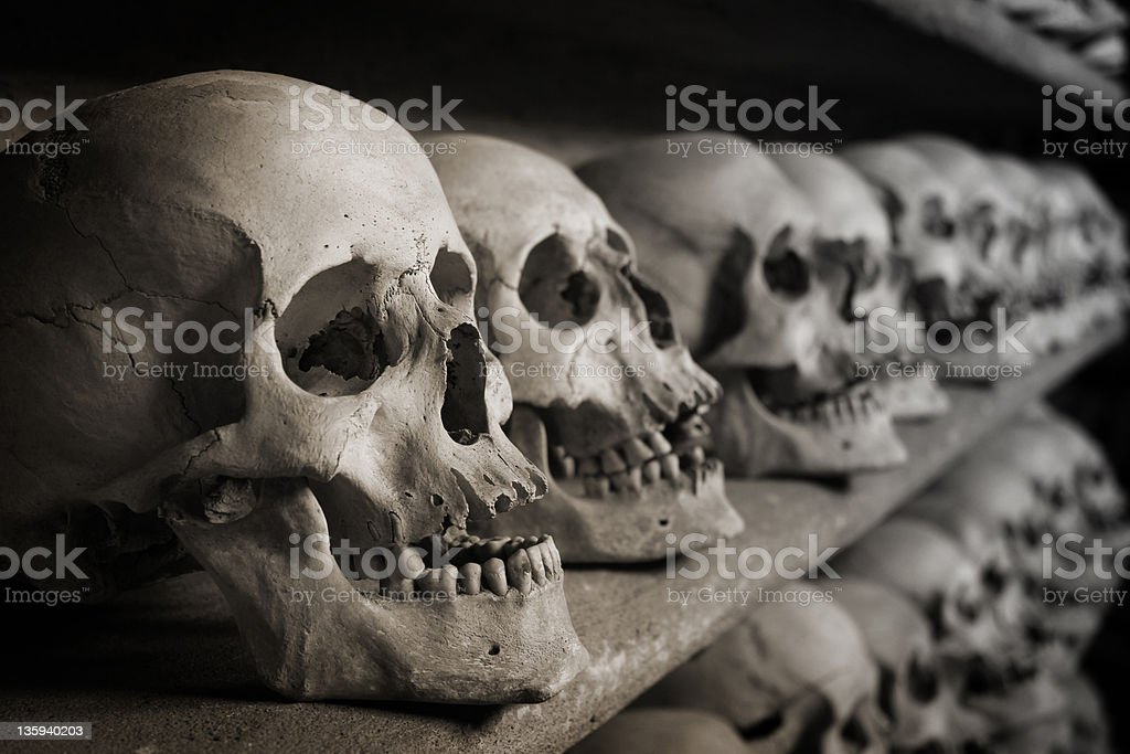 skulls on shelf stock photo
