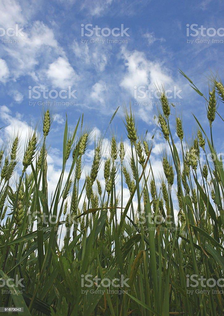 Sky above grain stock photo