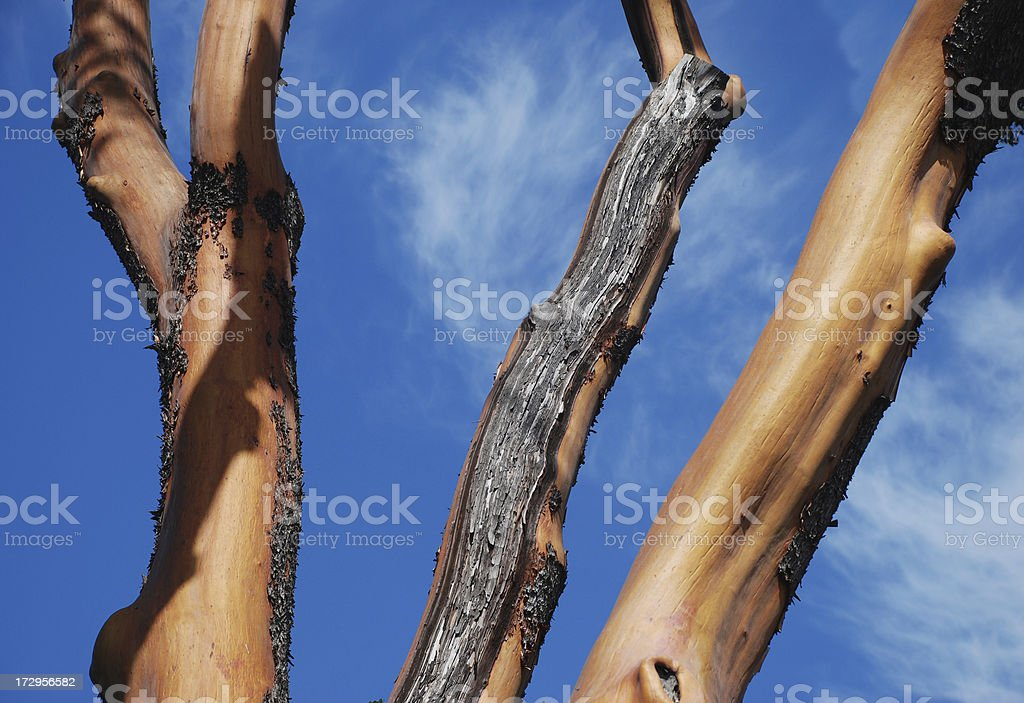 Sky and Arbutus stock photo
