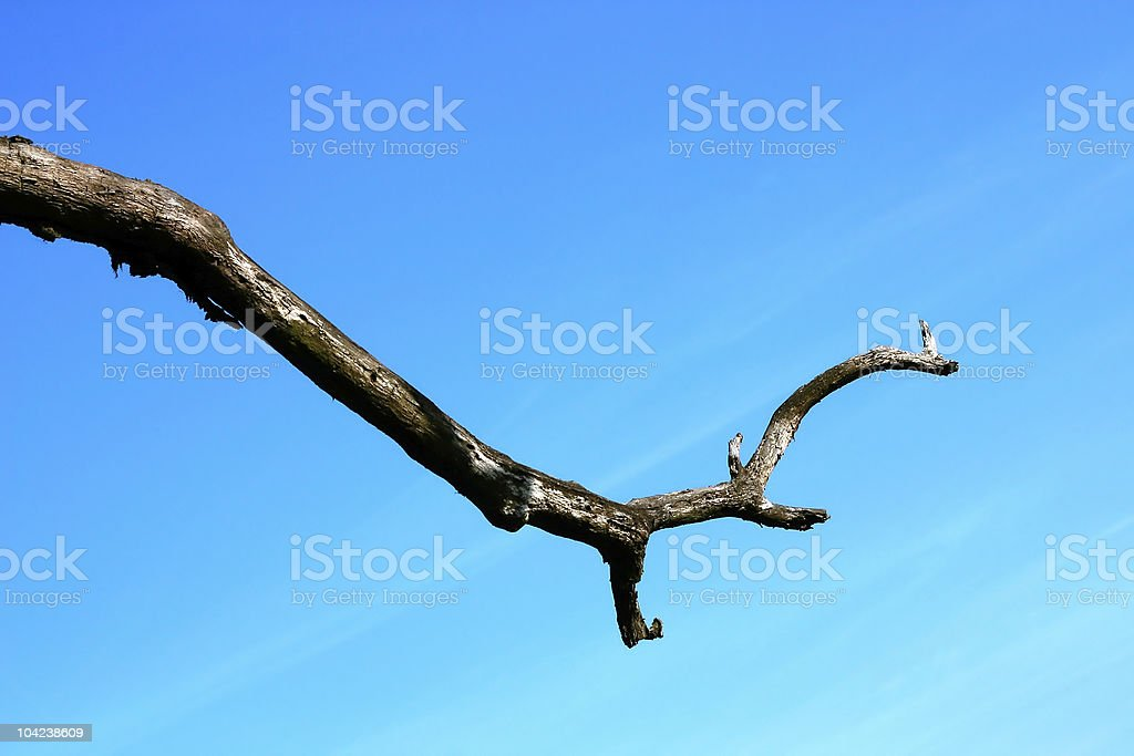 Sky and Dead Branch royalty-free stock photo