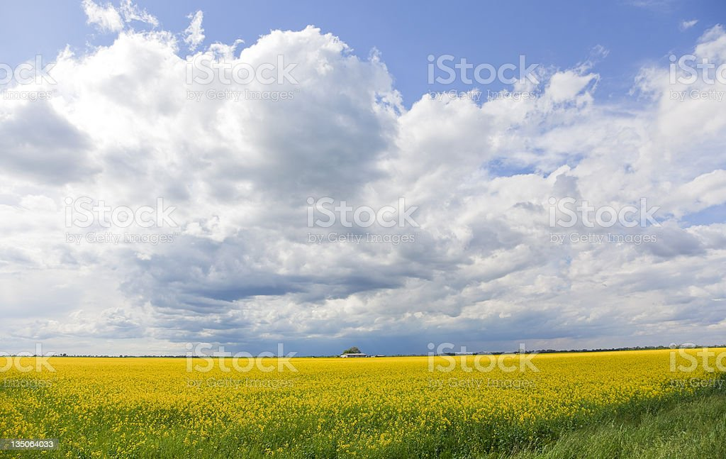 Sky and Fields, Agricultural Landscape in Italy stock photo