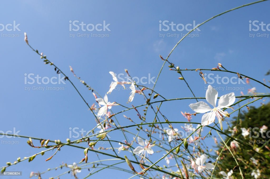 Sky and flowers stock photo