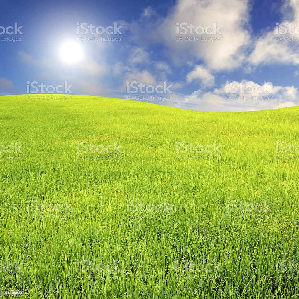 sky and grass background stock photo