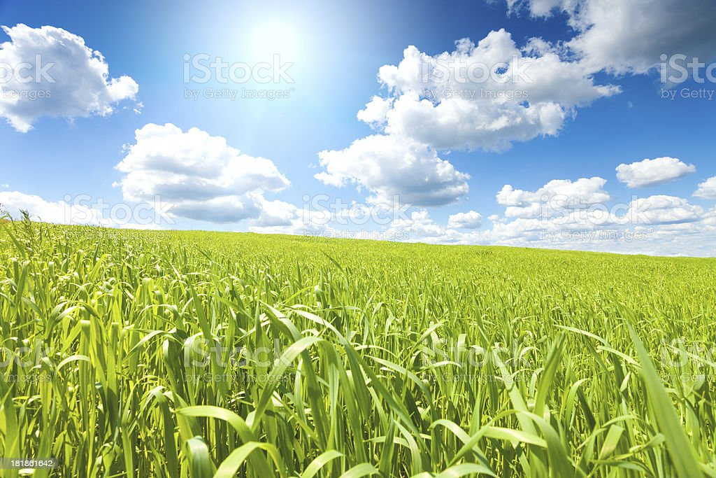 Sky and grass royalty-free stock photo