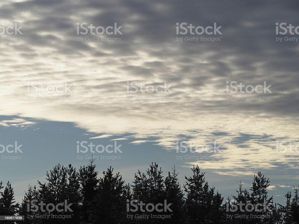sky and tree tops royalty-free stock photo