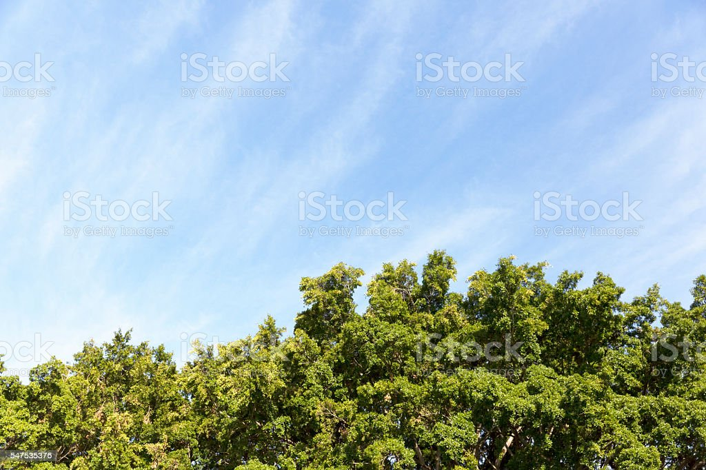 Sky and trees, beautiful nature background with copy space stock photo