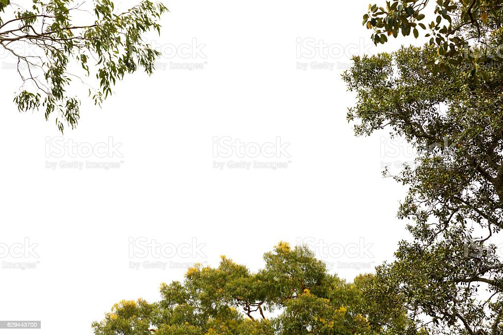 Sky and trees, nature bautiful background with copy space stock photo