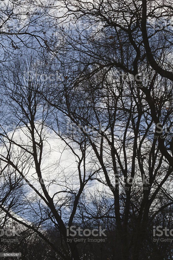 Sky and trees.. stock photo