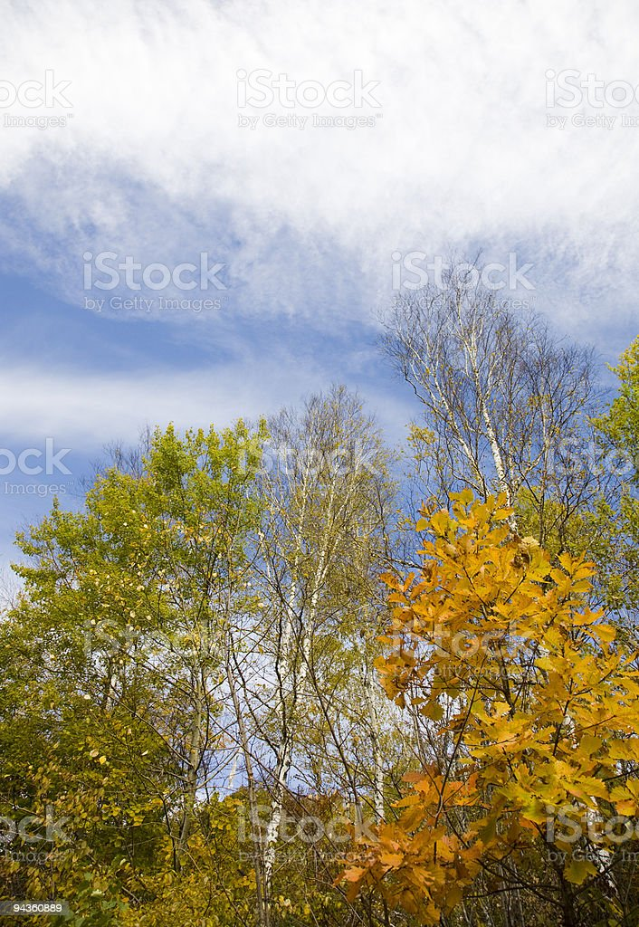 sky and trees stock photo