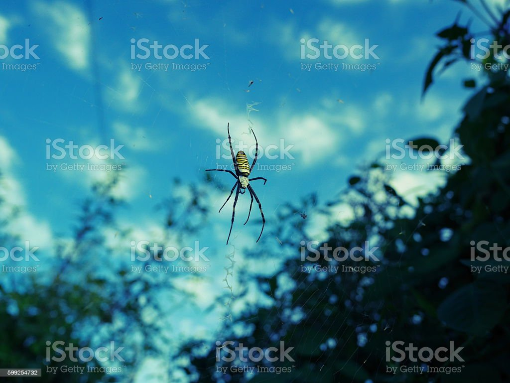 sky background of spider stock photo