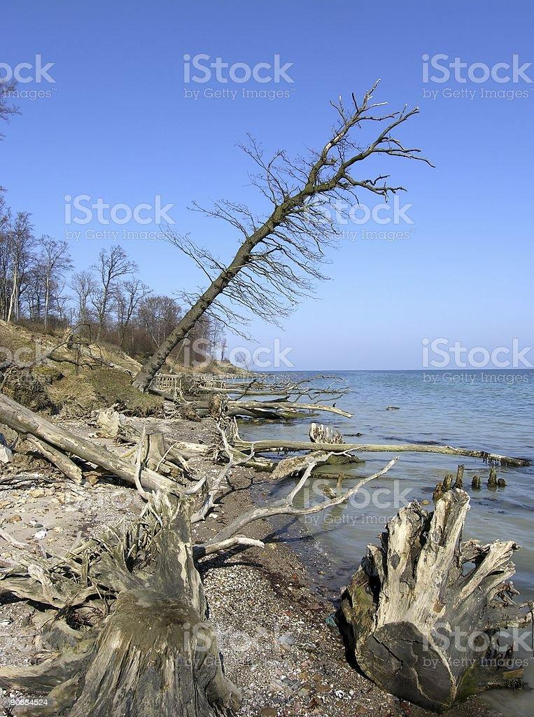 Sky Blue Driftwood stock photo