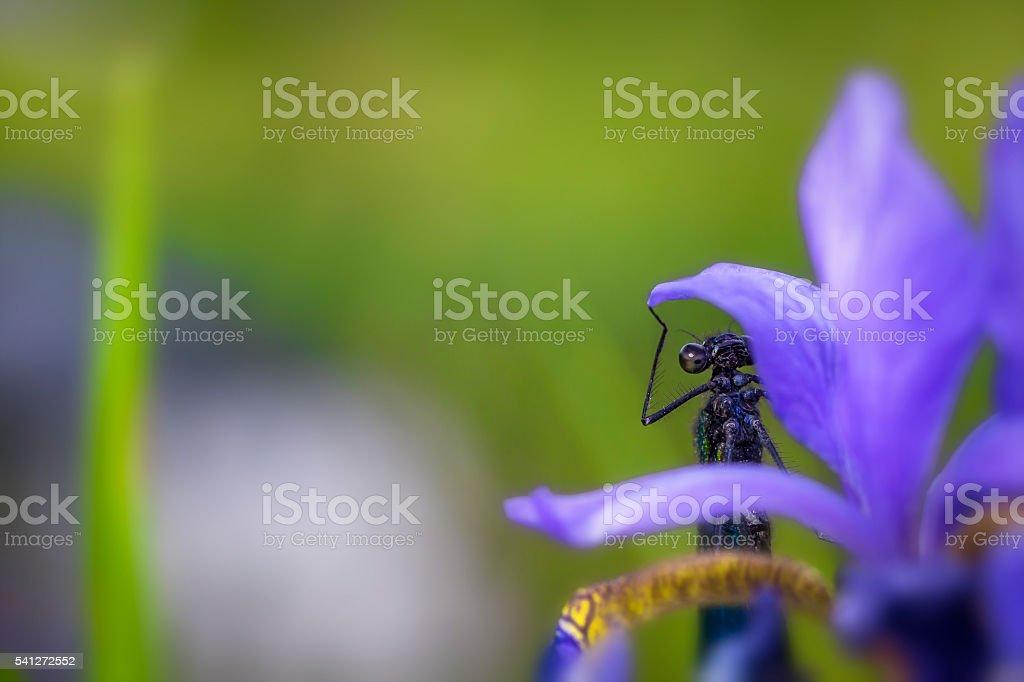 Sky dragonfly on a flower stock photo